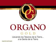 QUALIFICACION EN ORGANO GOLD - ESPANOL