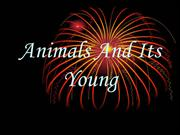 Animals And Its Young