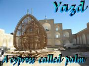 Iran Yazd8 A cypress called palm