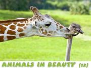 Animals in Beauty (12)