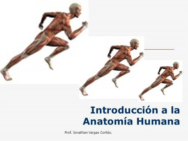 ANATOMIA Humana Introducción Planos Y Ejes |authorSTREAM