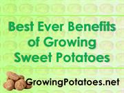 Best Ever Benefits of Growing Sweet Potatoes