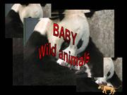Baby Wild Animals - Emanuela Atanasiu