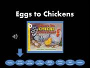 Eggs to Chickens