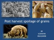 post harvest spoilage of grains