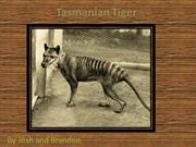 Tasmanian Tigers - By Josh and Brandon