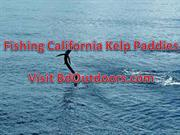 How To Find A Kelp Paddy