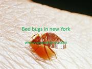 Bed bugs in new York ppt