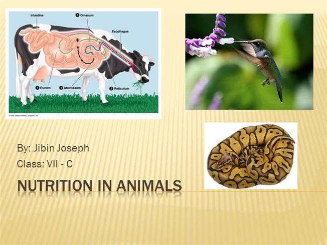 Nutrition In Animals Ncert By Jibin Joseph Authorstream