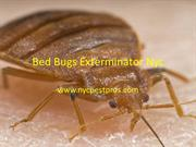 Bed Bugs Exterminator Nyc