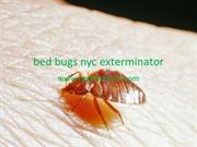 bed bugs nyc exterminator