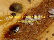bed bugs exterminators nyc ppt