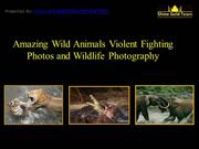 Watch Rarely Seen Wild Animals Violent Fighting Photos