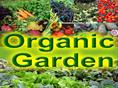 How To Build An Organic Garden