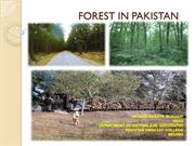 FOREST IN PAKISTAN