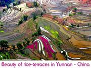 CHINA - Beauty of rice-terraces in Yunnan