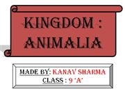 ANIMALIA KINGDOM