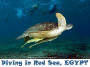 EGYPT -diving Red in Sea