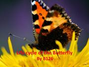 K2: The Life Cycle of the Butterfly by b126/Manning&Almeida