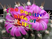 Positive side of Life