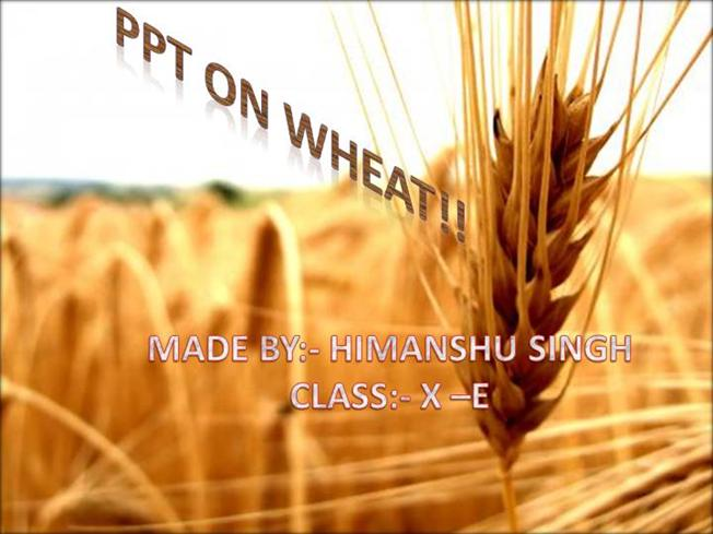 WHEAT |authorSTREAM