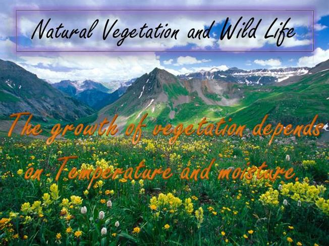 NATURAL VEGETATION AND WILD LIFE |authorSTREAM