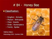 84Honey_Bee