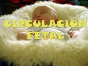 CIRCULACIN FETAL