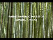 Famous Bamboo Forest of Sagano - Japan