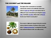 Coconut and the Kalash