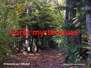 foret mysterieuse