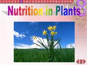 nutrition in plants- exp