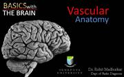 vascular anatomy of brain radiology
