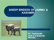 SHEEP BREEDS OF JAMMU & KASHMIR