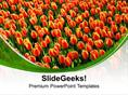 PEOPLE BEAUTIFUL TULIPS ON WHITE BACKGROUND PPT TEMPLATE
