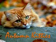 AUTUMN KITTIES