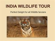 India Wildlife Tour - Perfect Delight for all Wildlife fanciers