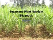 nutrient deficiency symtoms in sugarcane