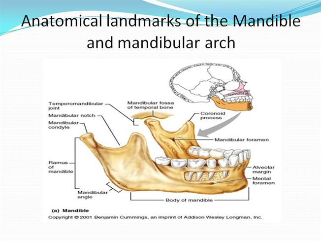 Anatomical Landmarks Of Mandible Authorstream