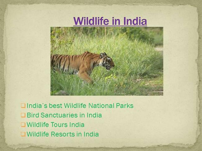 essay on conservation of wildlife in india Today, efforts are being made towards wildlife conservation in india, to preserve this natural wealth numerous wildlife conservation projects have been undertaken in india, both at the government as well as the individual.