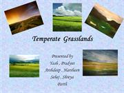 temperate grassland modified