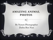 Amazing Animal Photos
