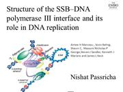 SSB interaction with holoenzyme
