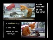 99738 A short cat and mouse story-091203074835-phpapp01
