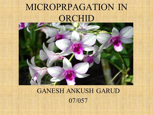 Pdf) orchids: advances in tissue culture, genetics, phytochemistry.