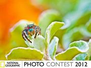 NG Photo Contest 2012 (part2)
