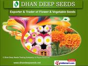 Verbena Seeds by Dhan Deep Seeds Trading Company, Pune