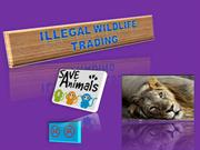 Illegal Wildlife trading