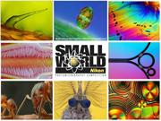 Photomicrography Competition - NSW 2012