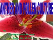 ANTHER AND POLLEN CULTURE